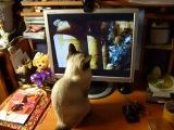 кошка моська смотрит кино